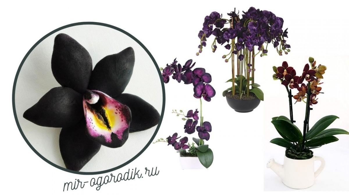Три вида орхидеи