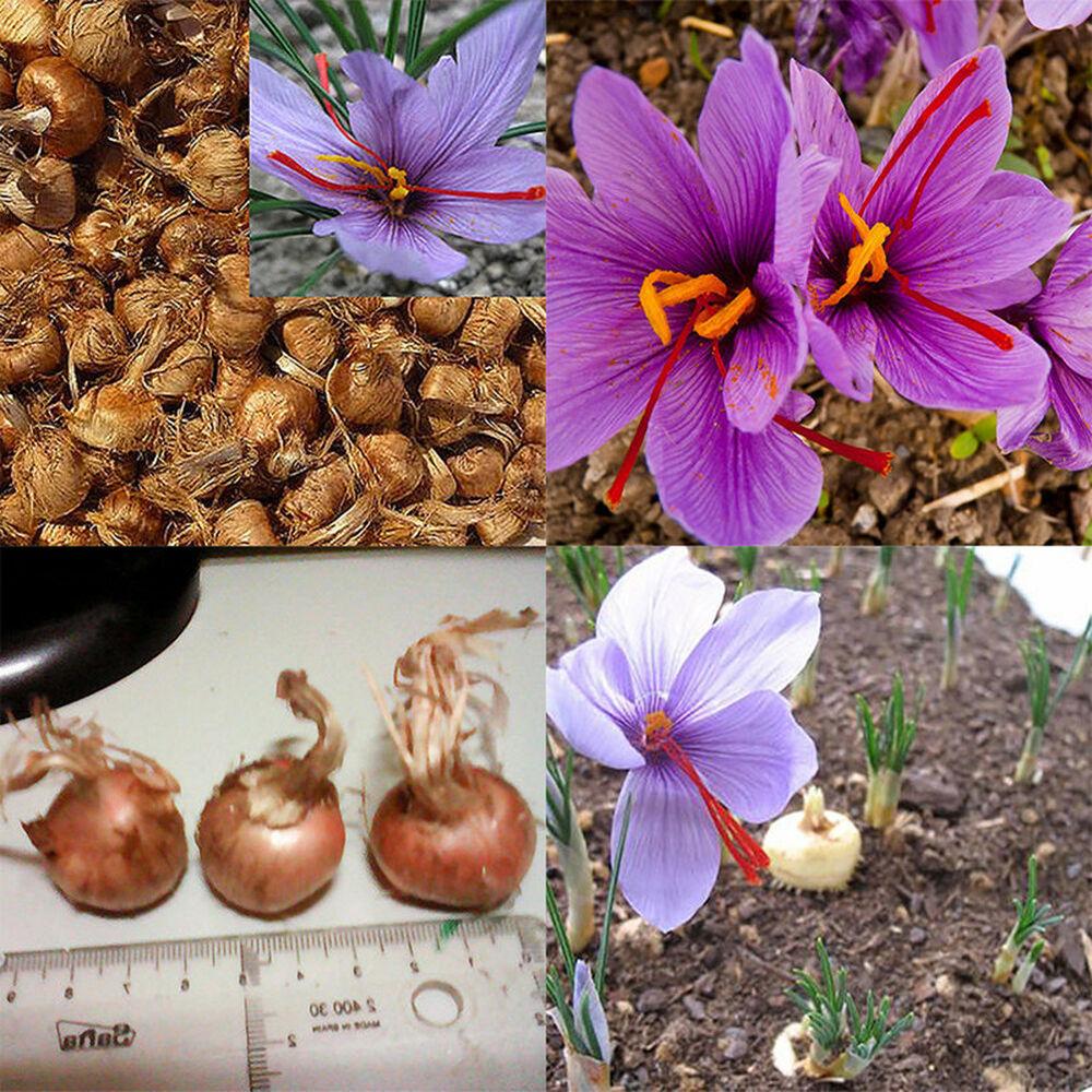 При вегетативном способе сохраняются свойства сорта